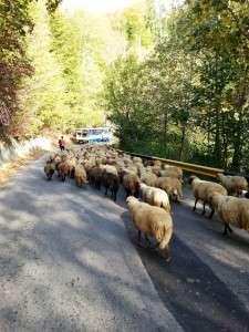 Produse naturale din Romania