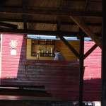 Restaurant Papa in Drum - Delta Dunarii 09