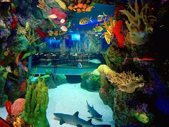Aquarium // sursa foto: huffingtonpost.com