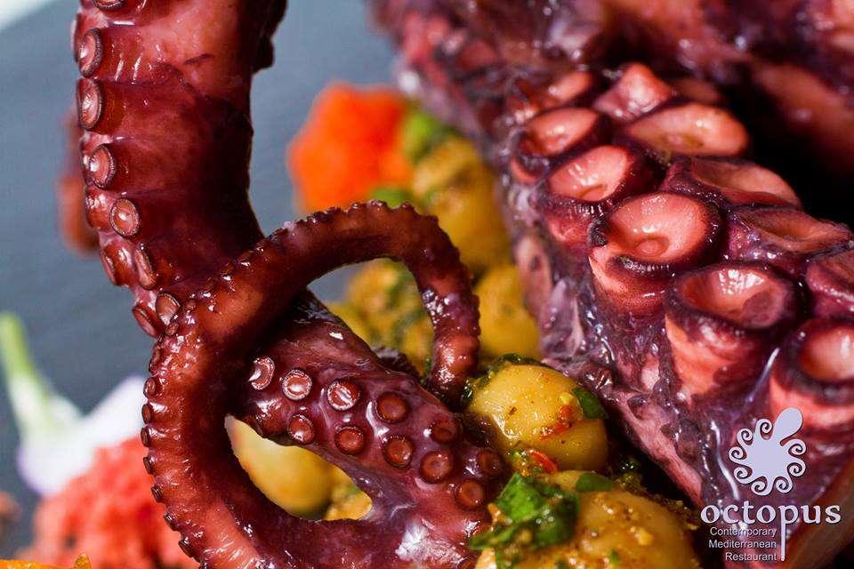 octopus 7