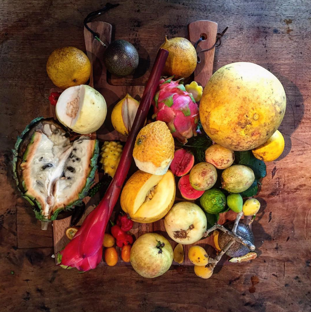 Fructe australiene // sursa foto: Instagram
