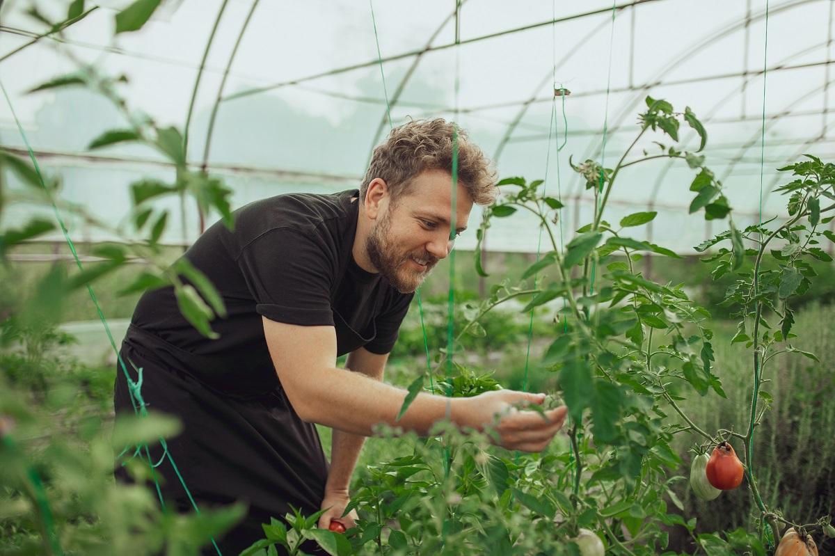 chef Alexandru Iacob, restaurant MAT, intr-o sera de legume, uitandu-se la plante