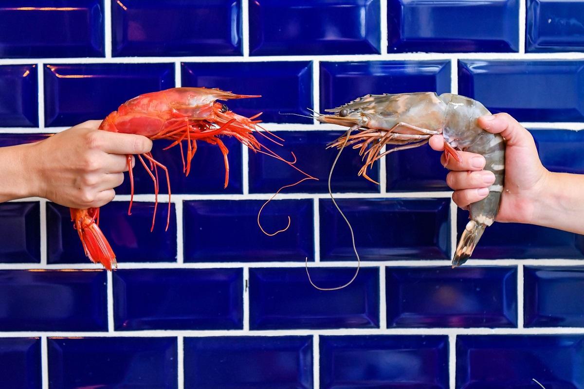 Un homar si un crustaceu, tinuti in mana, fata in fata, pe fundalul unui perete de faianta albastra