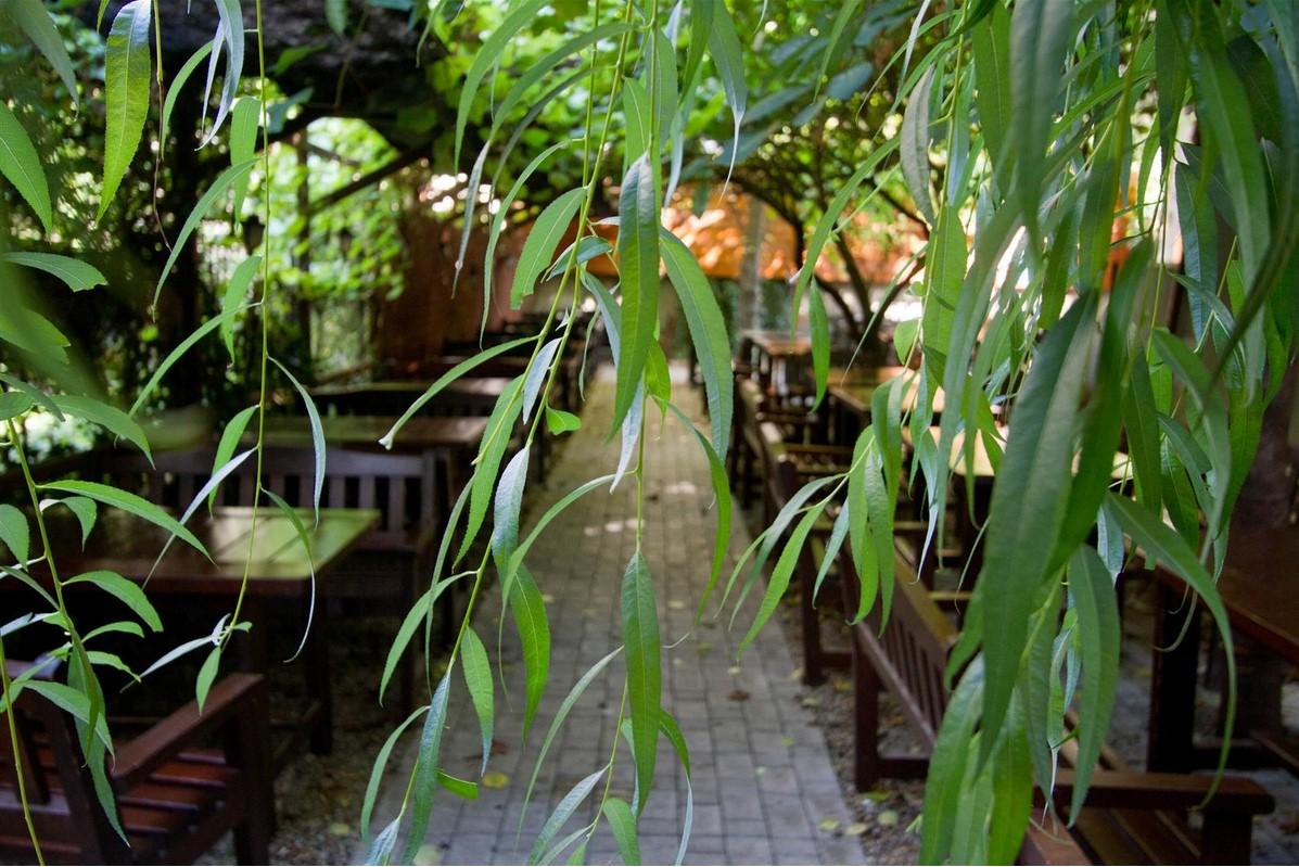 terasa Lente Arcului fotografiata printre ramuri de salcie printre care se vad mesele din lemn cu bancute din lemn